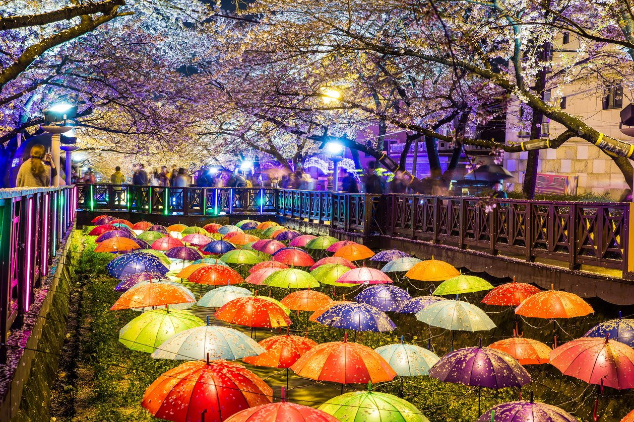 [K-TRAVEL/TRAZY] 2016 Edition: Top 5 Spring Festivals in ...